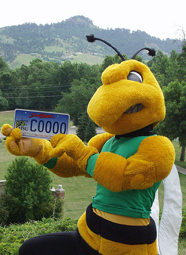 BHSU's Mascot, 'Buzz' with a Yellow Jacket License Plate