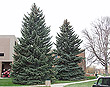 christmas-tree-3382_thumb.jpg