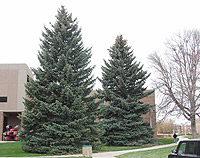 christmas-tree-3382_web.jpg