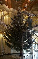 tree-0904_web.jpg
