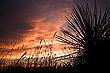 yucca-at-sunsetsmall_thumb.jpg